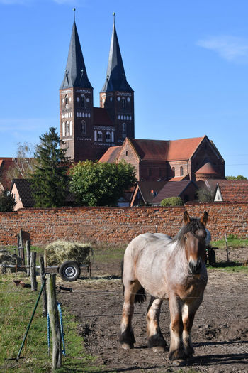 Horse standing on field against building