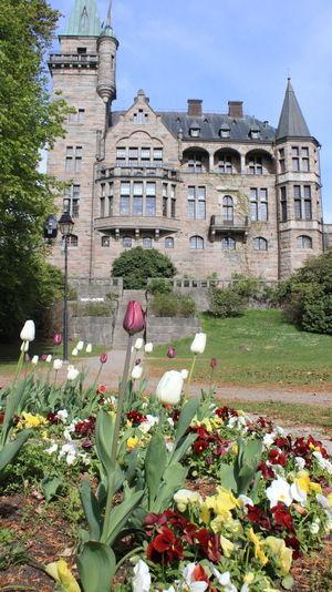View of flowering plants in yard against building