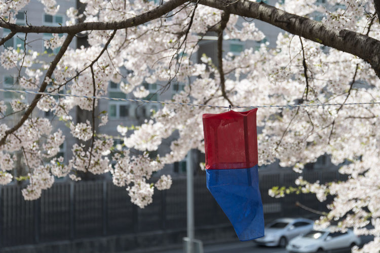 spring time with cherry blossoms at Anyangcheon in Seoul, South Korea Anyangcheon Architecture Beauty In Nature Branch Cherry Blossoms Close-up Day Flower Focus On Foreground Fragility Freshness Growth Hanging Nature No People Outdoors Red Spring Tree