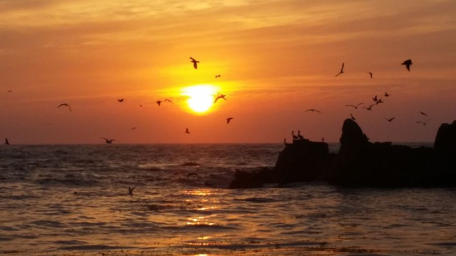 Sunset Sun Flying Reflection Silhouette Sea Travel Destinations Travel Landscape Bird Tourism Animal Wildlife Outdoors Morning Arrival Dawn Vacations No People Beach Beauty