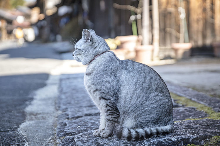 Close-up of a cat looking away on street