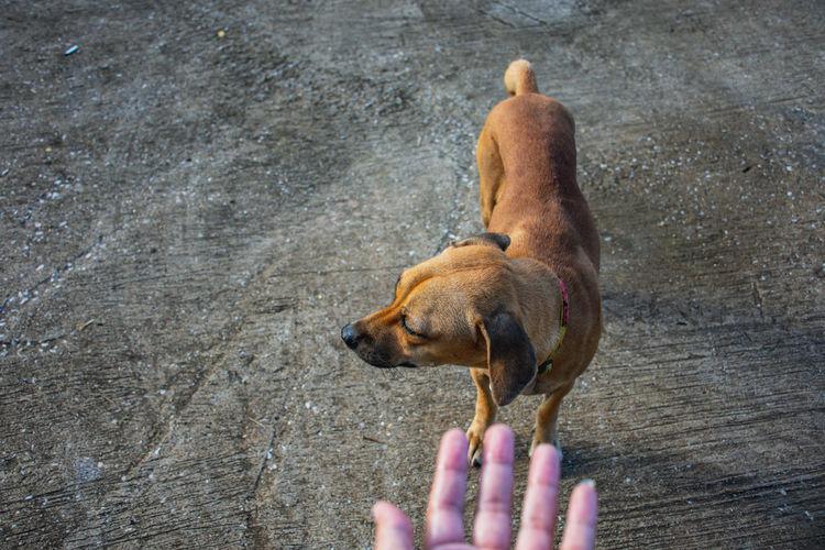 Brown fur dog