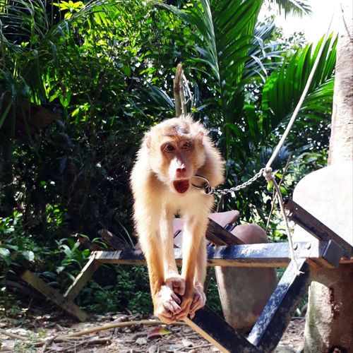 monkey Green Looking Away Looking Candid Animal Animal Themes Monkey Face Monkey Tree Pets Water Portrait Dog Full Length Sitting Sleepy Growing Animal Tongue Animal Mouth Licking Animal Nose Mouth Open Animal Teeth Domestic Blooming Sticking Out Tongue Snout Protruding Panting Backyard
