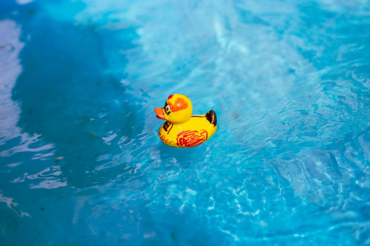 Water Rubber Duck Floating Floating On Water Yellow Toy Waterfront Representation No People Animal Representation Nature Blue Swimming Swimming Pool Pool Day Animal Themes Animal Outdoors Inflatable  Turquoise Colored