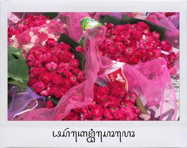 Flowershop On The Street🌷💕 Rosé