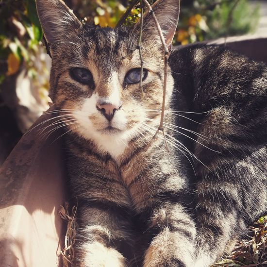 Mammal Domestic Cat Animal Themes One Animal Pets Feline Animal Domestic Animals Portrait Whisker Leopard Day No People Close-up Outdoors Nature Cats Cats Of EyeEm Catoftheday BlindCat