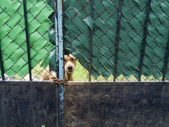 Dog Seen Through Gate