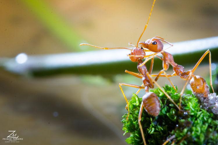 Animal Antenna