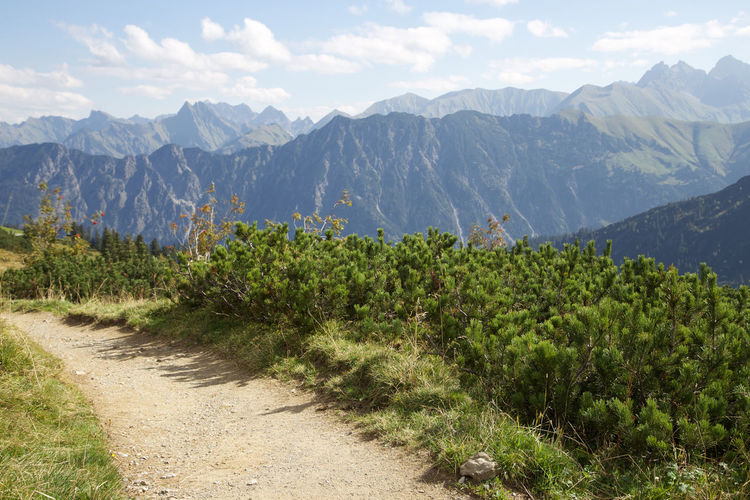 Allgäu Allgäuer Alpen Alpine Alpine Flower Alps Alpsee Clear Sky Cliffs Climbing Day Deutschland Fresh Germany Green Hiking Landscape Mountain Mountains Nature Outdoors Soft Light Trekking Wandering Wanderlust Wellness