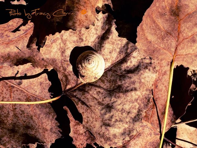 After The Floodwater Fragility Textured  Close-up History Beauty In Nature Outdoors Snail Shell Close Up Forest Floor