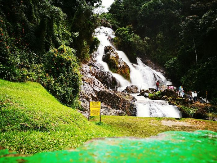 Tree No People Grass Nature Green Color Growth Beauty In Nature Outdoors Day Close-up Sky Waterfalls💦 Waterfall Colombia Naturephotography Water Waterdrops Water Falls Águas Cristalinas Aguascristalinas