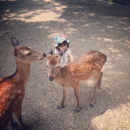 High Angle View Of Toddler Petting Deer In Zoo