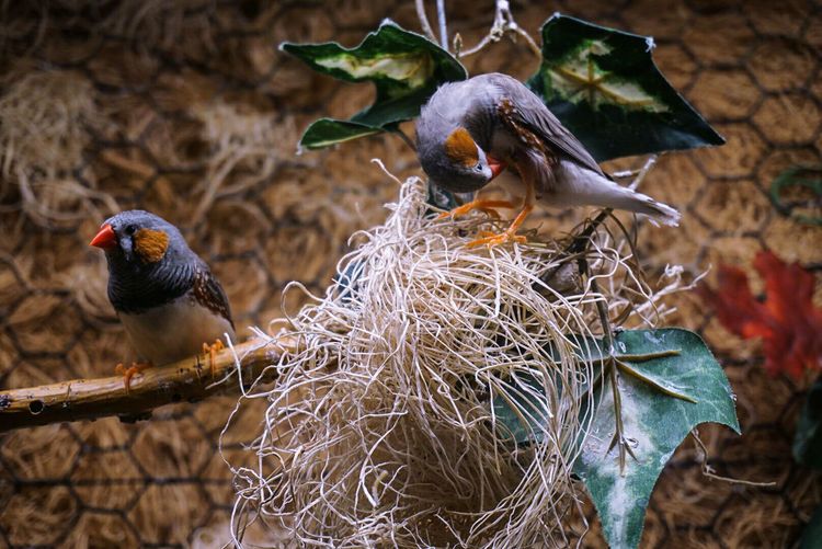 Close-Up Of Birds Perching
