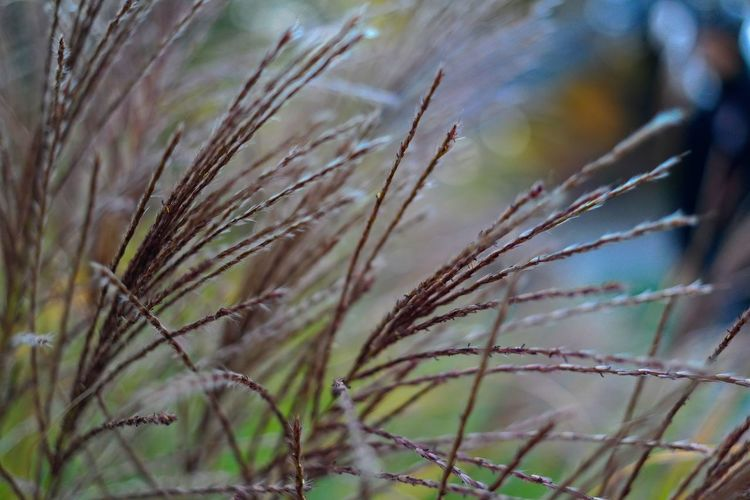 Plant Growth Nature No People Day Close-up Selective Focus Focus On Foreground Tranquility Beauty In Nature Outdoors Field Grass Winter