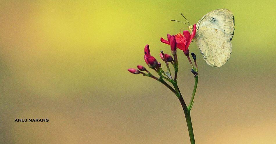 Butterfly Nature Bokeh Photography Flowers Hauzkhasvillage RedFlower Nikonphotography