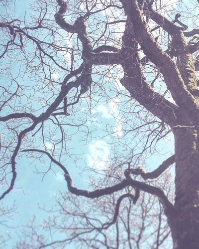 Under my skin my veins Tree Forest Nature Beauty In Nature No People Day Tranquility Sky Picture Byme Daylight Pictureoftheday