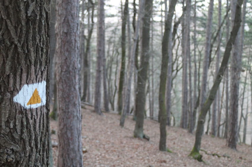 A Walk In The Woods Day Feeling Feelings Field Forest Hike Hiking Into The Woods Narrow Nature Nature Photography No People Normal People Scare Me Outdoors Railing Sign Touristsign Tree Tree Trunk Wood WoodLand WoodLand Woodlands Trail Woods