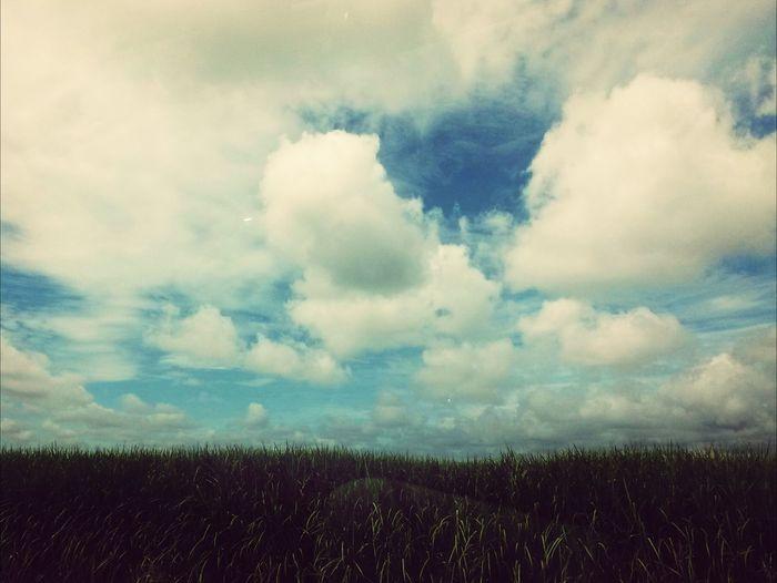 Beautiful crops?☀ First Eyeem Photo