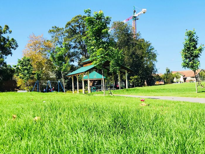 Tree Grass Growth Green Color Day Clear Sky Architecture Green Built Structure Building Exterior Outdoors Blue Nature No People Sky Tranquility Beauty In Nature Photography Scenery Scenics Nature Photography Nature Breathing Space Beauty In Nature Tranquil Scene