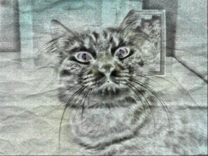 Hdr_arts  HDRcamera Art, Drawing, Creativity Artphotography Animal_collection Artphoto Cute Pets