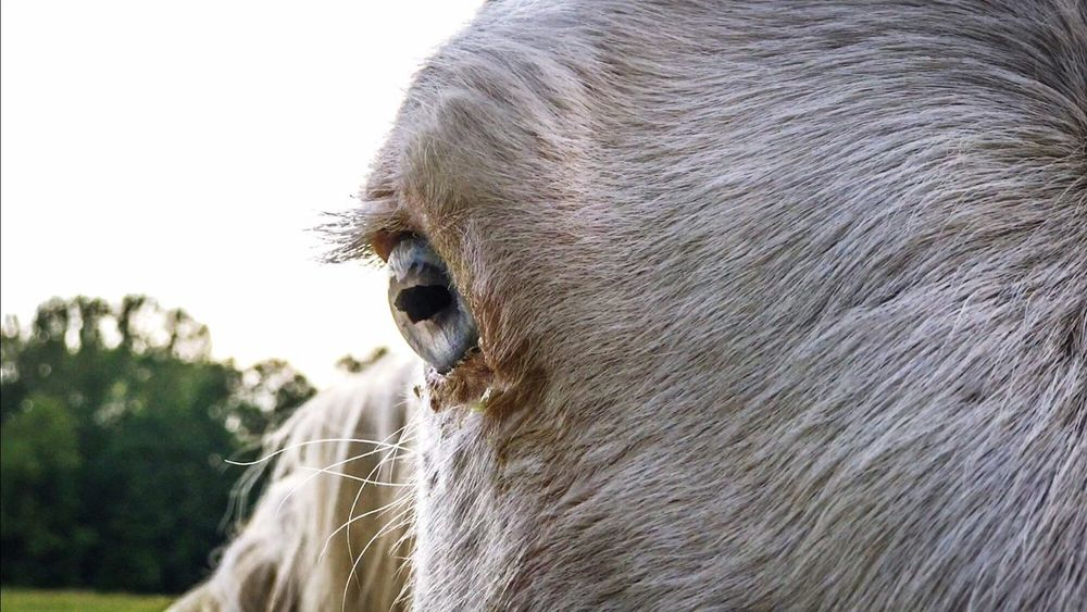 Domestic Animals Horse Close-up Horse Eye Horses Equestrianlife Equestrianphotography Equestrian Life Horse Life Horse Photography  BYOPaper! The Great Outdoors - 2017 EyeEm Awards The Photojournalist - 2017 EyeEm Awards EyeEmNewHere Live For The Story
