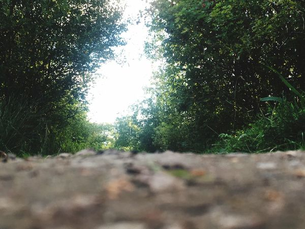 A floor perspective Tree Growth Selective Focus Tranquility Tranquil Scene Surface Level Forest Landscape Plant Nature Scenics Beauty In Nature Remote Non-urban Scene Green Day Green Color The Way Forward Countryside Sunny