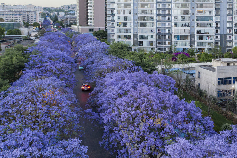 High angle view of purple flowering plant by buildings in city