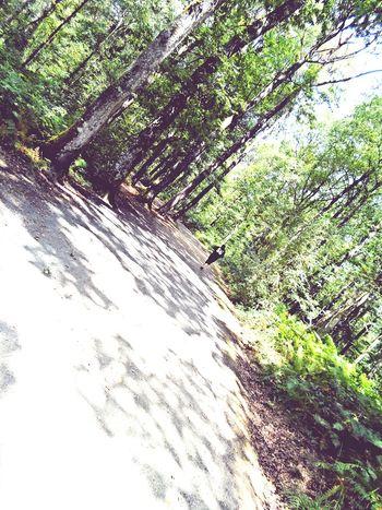 Foret Forest Arbre Tree Meditation SilléLeGuillaume Nature Amour Fiancé💕 Spiritualité