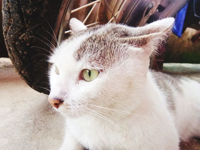 แมว EyeEm Selects Pets Feline Domestic Cat Portrait Whisker Close-up Cat Yellow Eyes Animal Face Tabby Animal Eye Stray Animal Home Couch Pet Bed Snout Ginger Cat Sleepy At Home Kitten Canine Carnivora Adult Animal Pampered Pets Owl