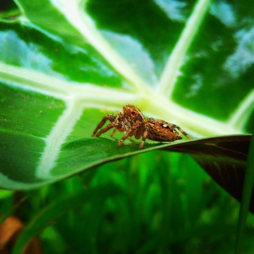 Spder One Animal Animal Wildlife Animals In The Wild Leaf Insect Animal Themes Green Color Nature No People Outdoors Plant Day Full Length Close-up Grasshopper Beauty In Nature