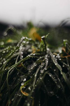 //. Plant Nature Outdoors Life EyeEmNewHere
