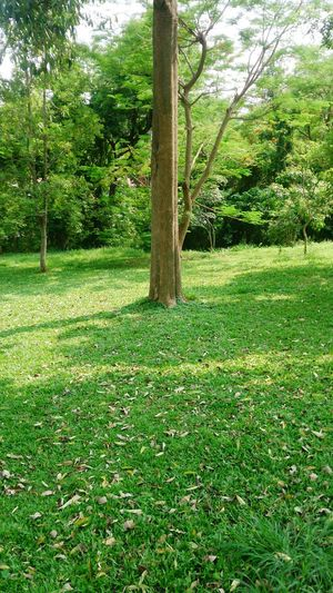 Tree Park - Man Made Space Branch Field Sunlight Grass Green Color Grassland Tree Trunk Green Bark Woods Plant Bark Countryside Greenery