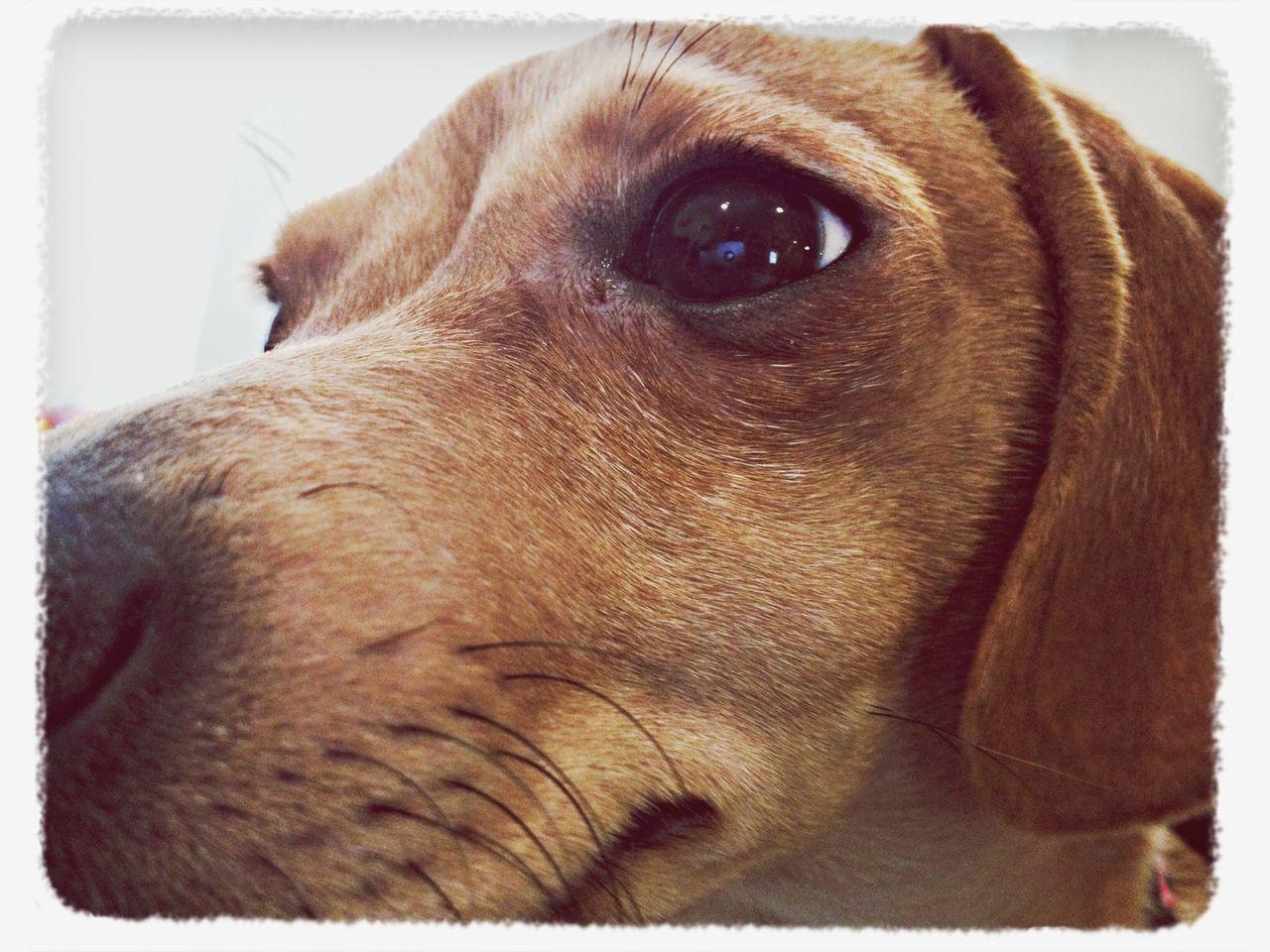 dog, pets, one animal, mammal, domestic animals, close-up, animal head, animal themes, no people, portrait, indoors, day