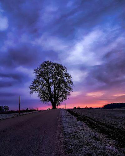 Der Morgenbaum Sunrise Sonnenaufgang Baum Winter Gutenmorgen Cold Kalt Himmelsfarben Purple Beauty In Nature Tree No People Nature Outdoors Sky