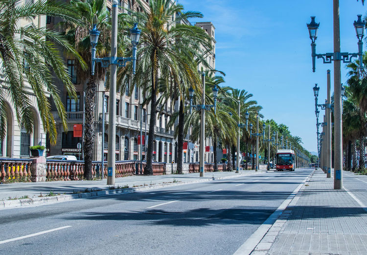Barcelona street EyeEmNewHere Architecture Building Exterior Car City City Street Coconut Palm Tree Day Incidental People Land Vehicle Mode Of Transportation Motor Vehicle Nature Palm Tree Plant Road Sign Sky Street Street Light Transportation Tree Treelined Tropical Climate