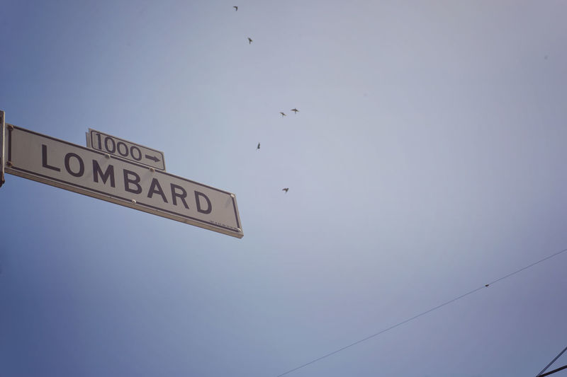 Bird Birds Clear Sky Close-up Day Direction Lombard Street Low Angle View Minimalism Nature No People Outdoors Road Sign Sky Street Sign Text