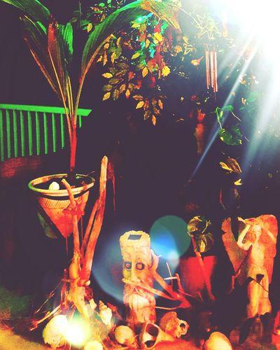 Such a magical place My Garden My Gardens Joy Palm Tree Nightlighting