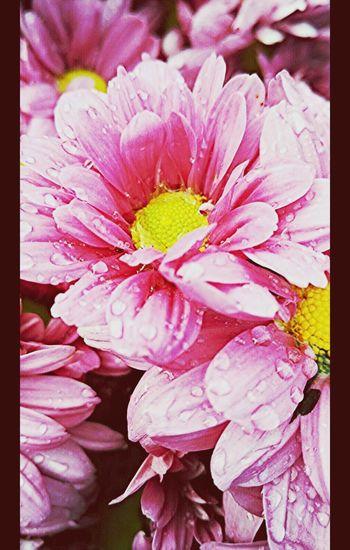 Beautiful Flowers 🌸 Coolpics Creative Shots