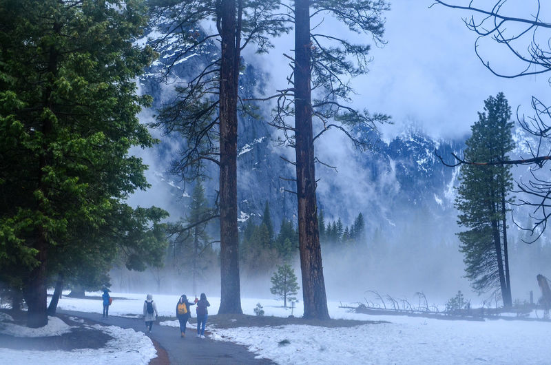 People on snow covered land against trees in forest