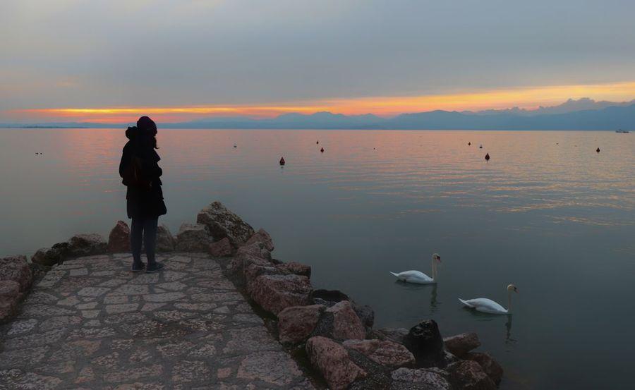 cigni Pink Lagoon Water Lake Garda Pinklake Sera Lazise Lake Garda Italy Lake Lake Lazise