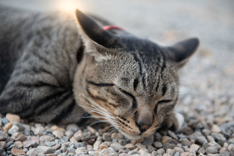 Close-up of a cat lying on pebbles