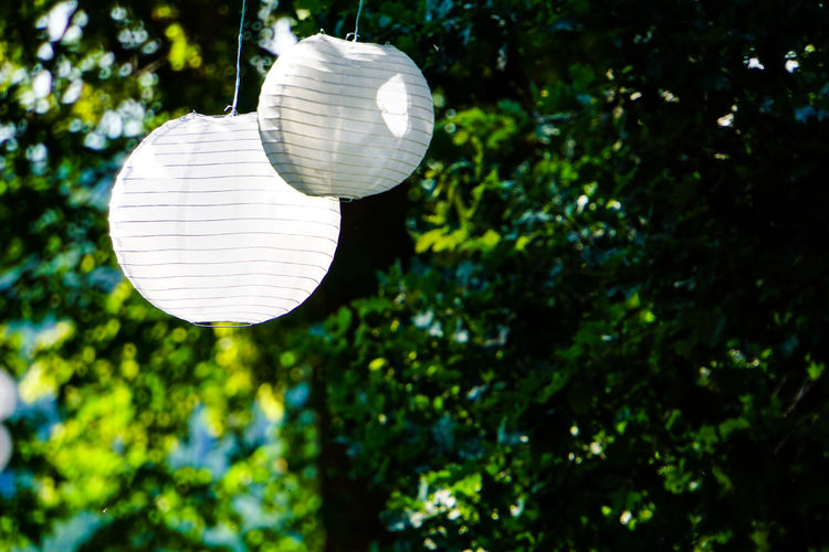 Low angle view of light bulb hanging from tree