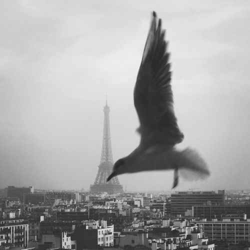Let me introduce you our new guest... Elsa, a parisian seagull, come to visit us everymorning. Now, she is part of the family... From My Window Paris Je T Aime Urban Landscape Naturelovers Everyday Joy