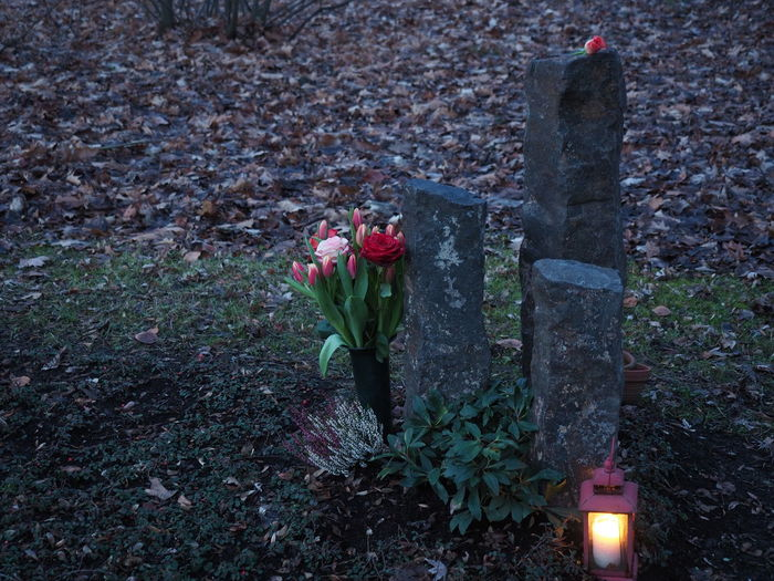 Cemetery Friedhof Graves Gräber