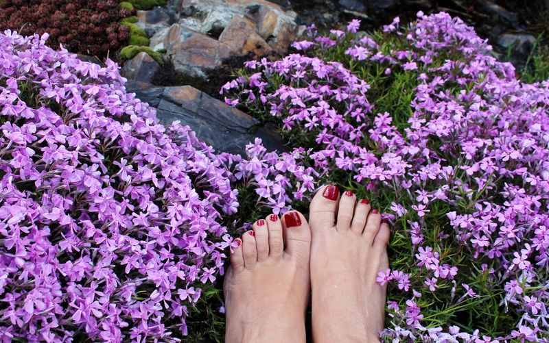 Barefoot Flower Purple Nail Polish Human Foot Outdoors People Freshness Springtime EyeEm Gallery Garden Photography Flower Collection Feelgood Feel The Moment Feet