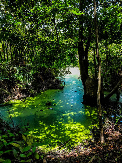 Nigerian Savannah Lekki Nigeria Lagosnigeria Swamp Swamp Photos Lushgreenery Savetheplanet Savetherainforests Picoftheday Photooftheday Nature Photography Nature Naturelovers Ronlouisphotos Ronlouisdesigns Etsy Eyem Best Shots EyeEm Nature Lover EyeEmBestPics