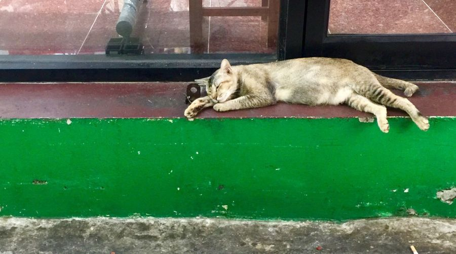 Sleep cat on footpath One Animal Mammal Pets Animal Animal Themes Domestic Relaxation Resting No People Domestic Cat Domestic Animals Sleeping Cat Feline Green Color Vertebrate Lying Down Eyes Closed  Day Sunlight