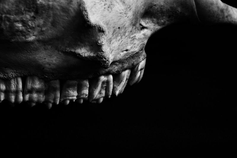 skull abstraction 05 Teeth Selective Focus Bokeh Full Frame Texture Black And White Photography Black And White Macro Photography Bone  Skull darkness and light Single Object Old Nature