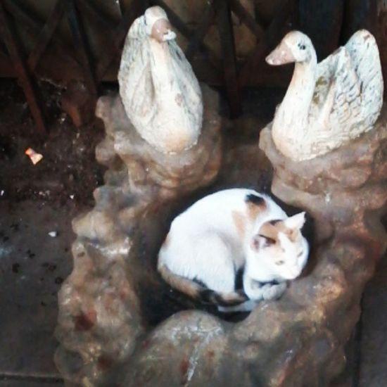 We're all looking for a place where we belong Lookingforahome Swancenterpiece Cat Causecats Foundontheroad Scrapman Bangaarwala Throwaways Notthecat Hesjustchilling