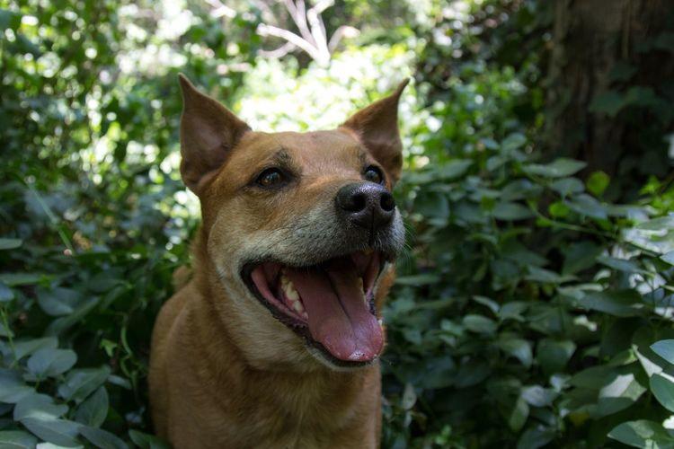 Close-up of dog sitting on plant